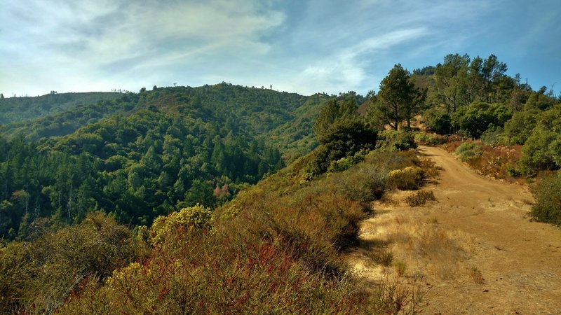 In the Santa Cruz Mountains, the Swanson Creek Valley is to the left (south) of the high ridge that Knibbs Knob Trail traverses. Not shown, but to the right (north) of this ridge, is the Uvas Creek Valley.