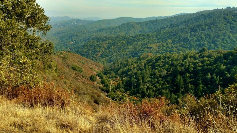 Santa Cruz Mountains, looking south from high on Knibbs Knob Trail.