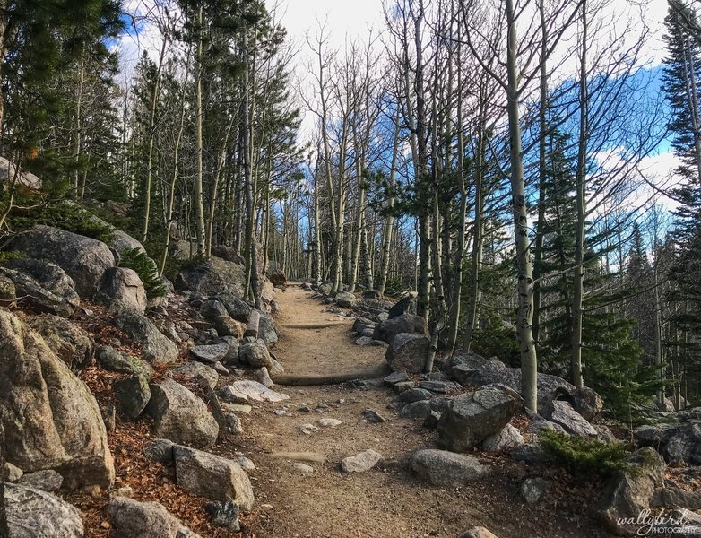 October 25, 2018 The Flattop Mountain Trail begins like this. Looking pretty easy so far. I'll bet this is beautiful in September when the Aspen change color!