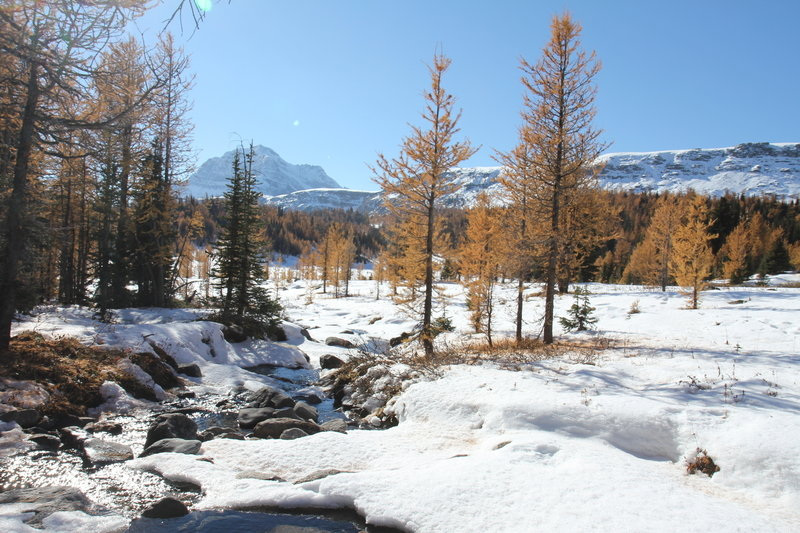 Larch meadows and creek along the trail to Healy Pass.