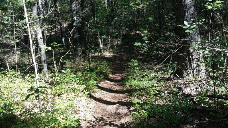Singletrack section of trail near Deer Run.
