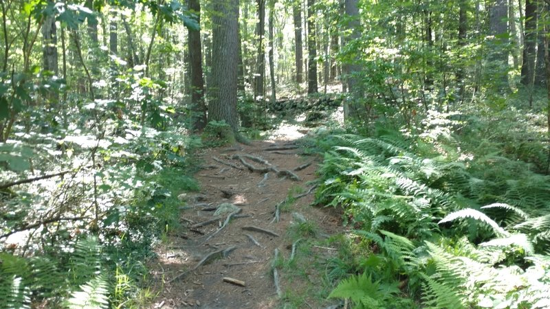 Main Entrance to the loop, expect small roots and rocks.