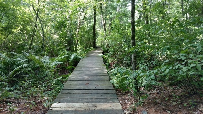 Lots of these bridges on the Tophet Swamp trails.