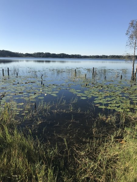 Lake Rogers
