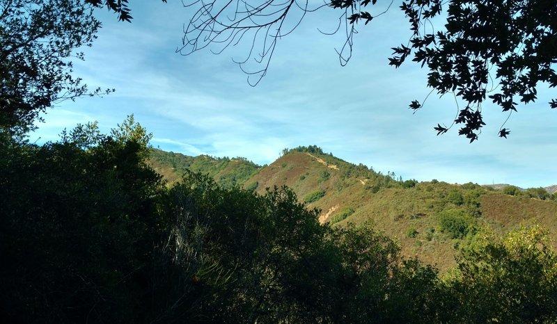 Knibbs Knob, a high point along a ridge in the Santa Cruz Mountains, is seen through the trees along Contour Trail.
