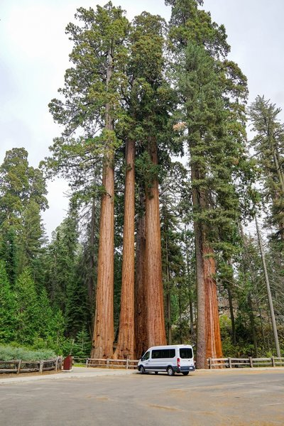 Views of the giant sequoias don't require much effort to enjoy, even from the parking lot.