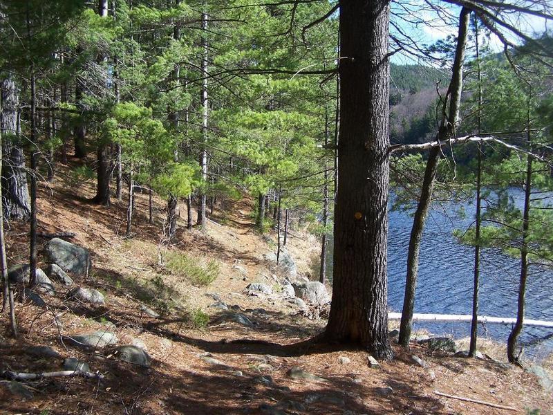 Along Long Swing Trail at Glidden Marsh.