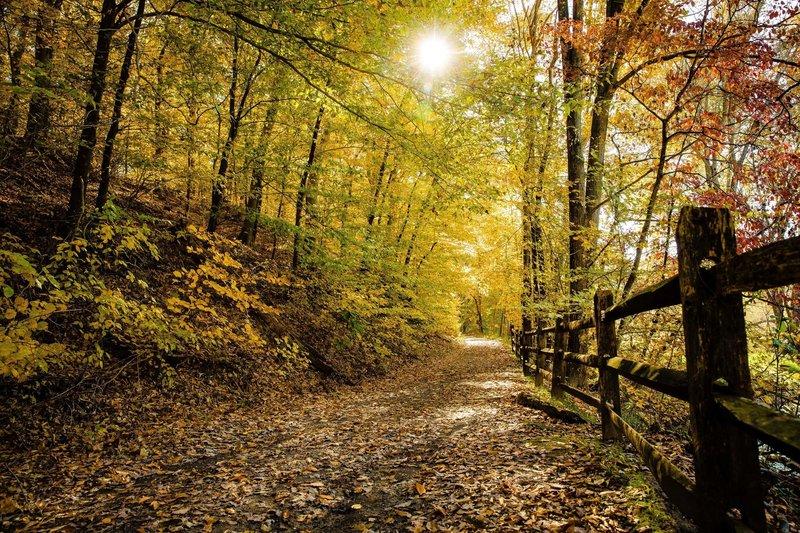 Fall color and sunshine.