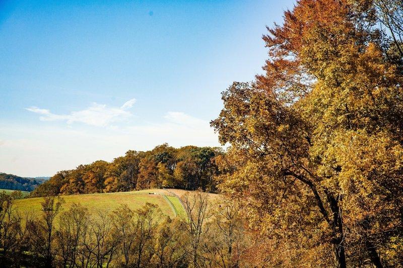 Overlooking horse pasture.