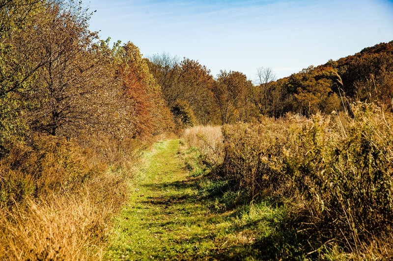Grass pathway.