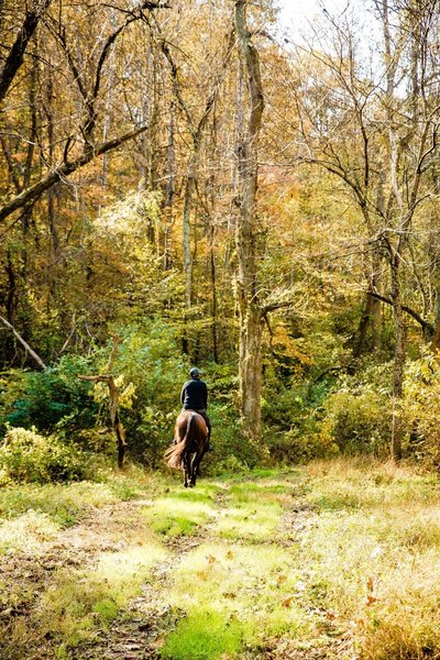 Horse along the trail.