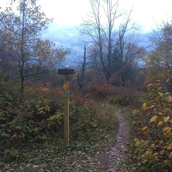 Fall colors in the Elm Ridge Wild Forest