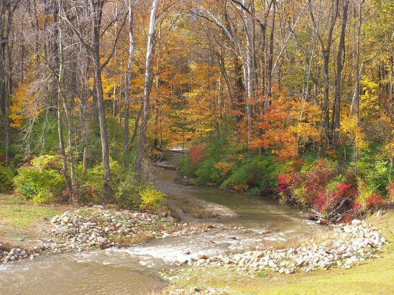 Mt. Gilead State Park - creek at the end of the dam.
