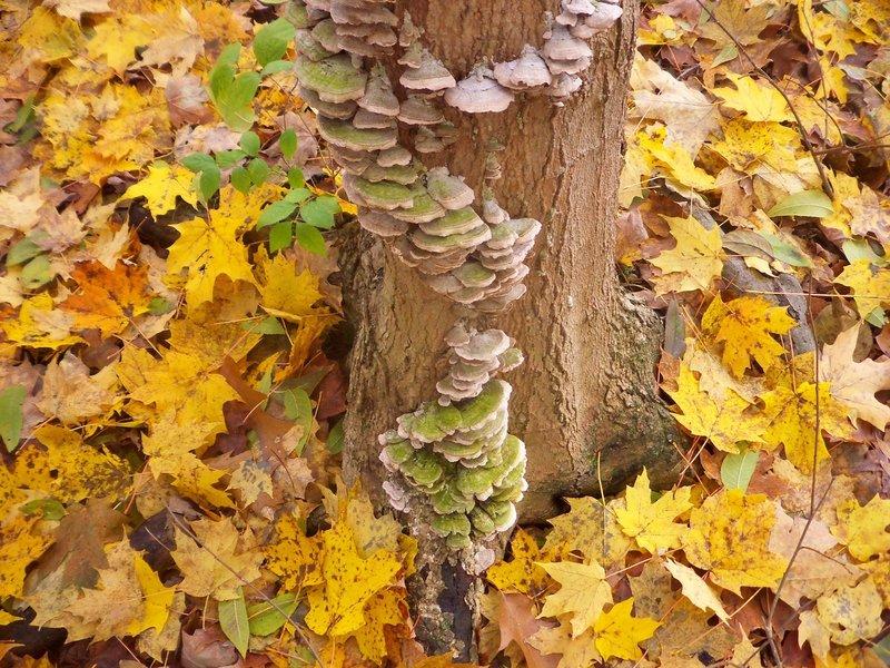 Mt. Gilead State Park - fungi.