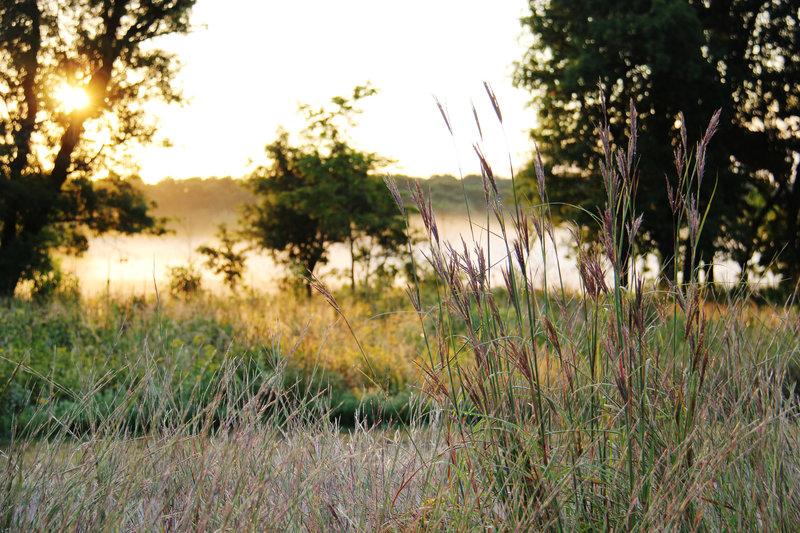 Bunker Hills Prairie/Oak Savannah