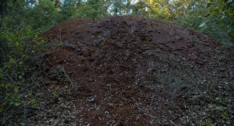 Enormous pile of sawdust left from an historic sawmill that was here many years ago. The pile of sawdust is all that is left.