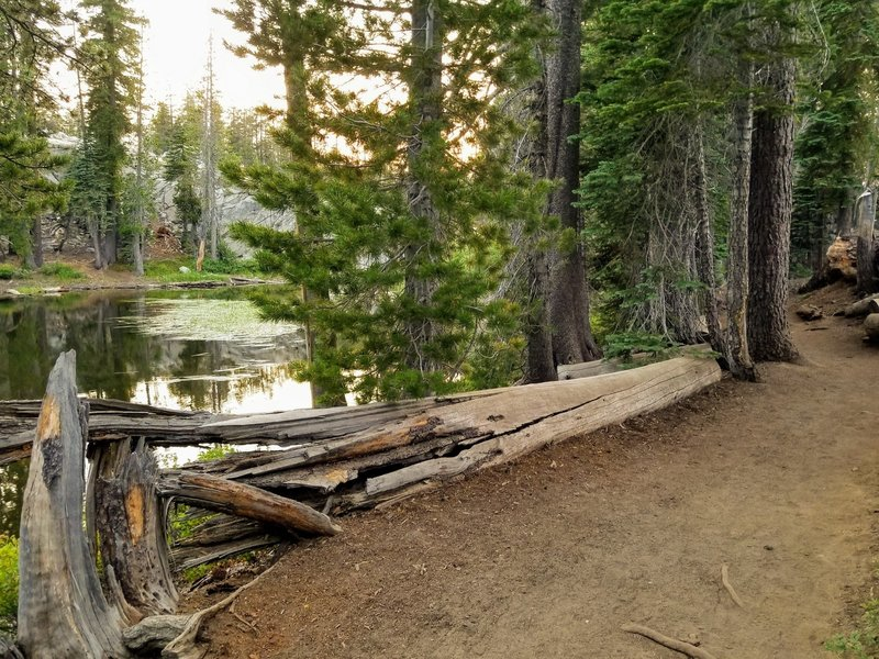 A forested trailside lake.