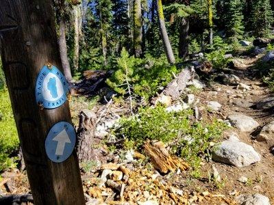 Kit Carson Campground, South Lake Tahoe, California | REI Camping
