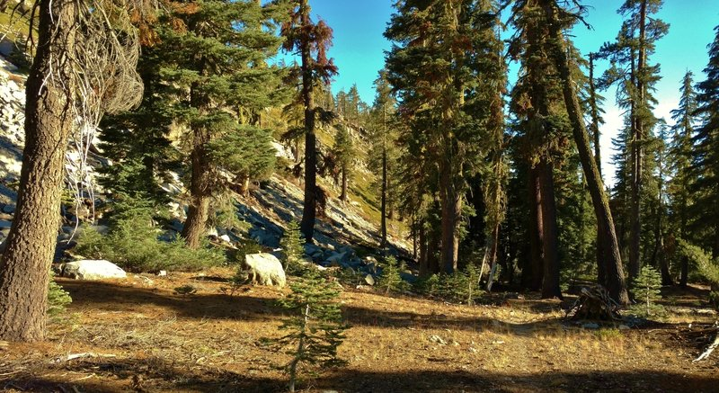 Rocky hillsides and tall firs along Twin Meadows Trail.