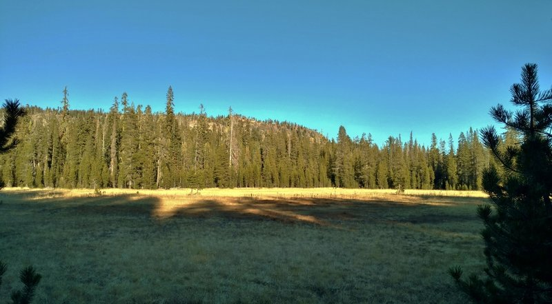 Looking east across the southern meadow of Twin Meadows from Twin Meadows Trail as the trail runs along the meadow's west edge.