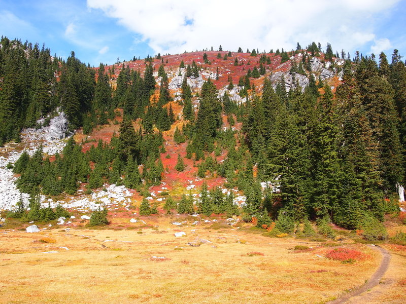 A meadow near Lake Valhalla, covered with huckleberry bushes in full fall color