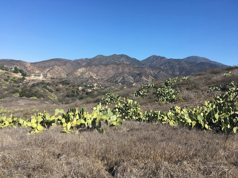 View of Trbuco Canyon Community Church across the cactus meadow.