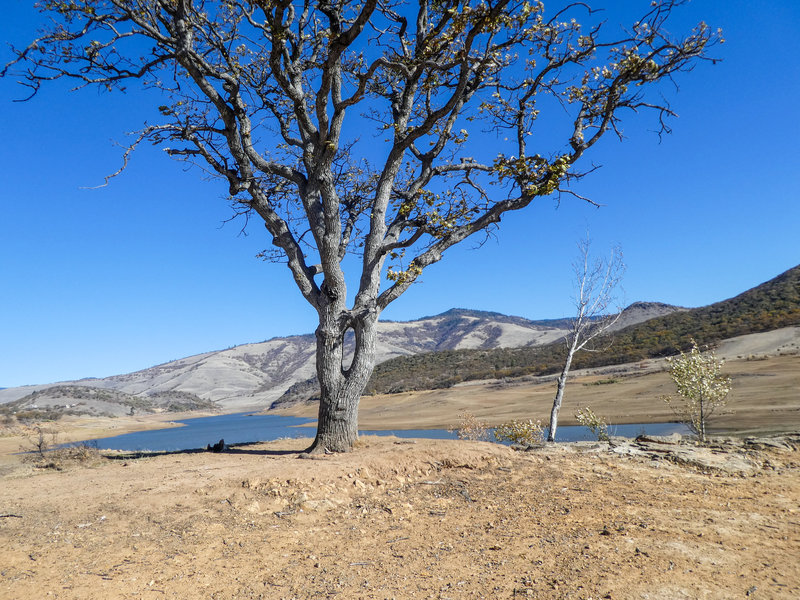 View from bottom of pioneer cemetery at Emigrant Lake; interesting joined tree.