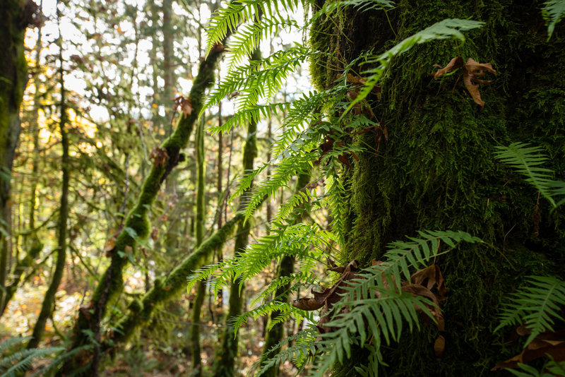 There's moss and ferns aplenty at Squires Lake Park.