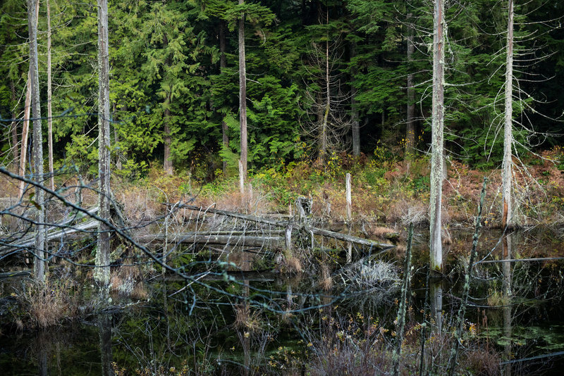 Beaver Pond is less visible than its larger neighbor, but the trees and vegetation in it's dark waters are more interesting.