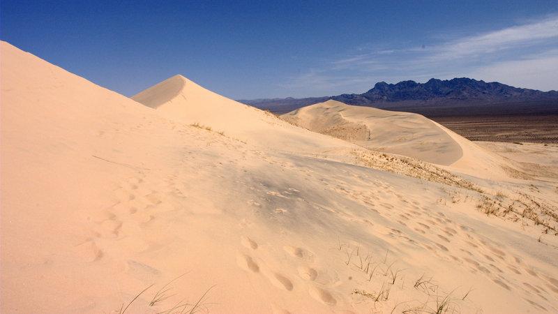 Kelso Dunes