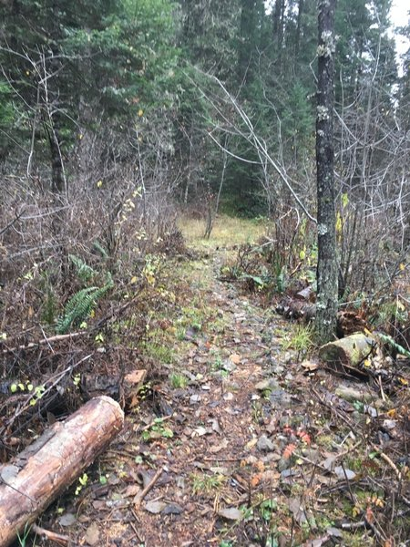 Mid section of trail