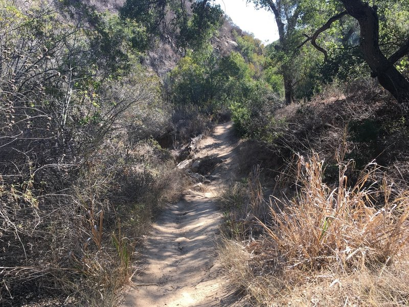 Laurel Canyon going up