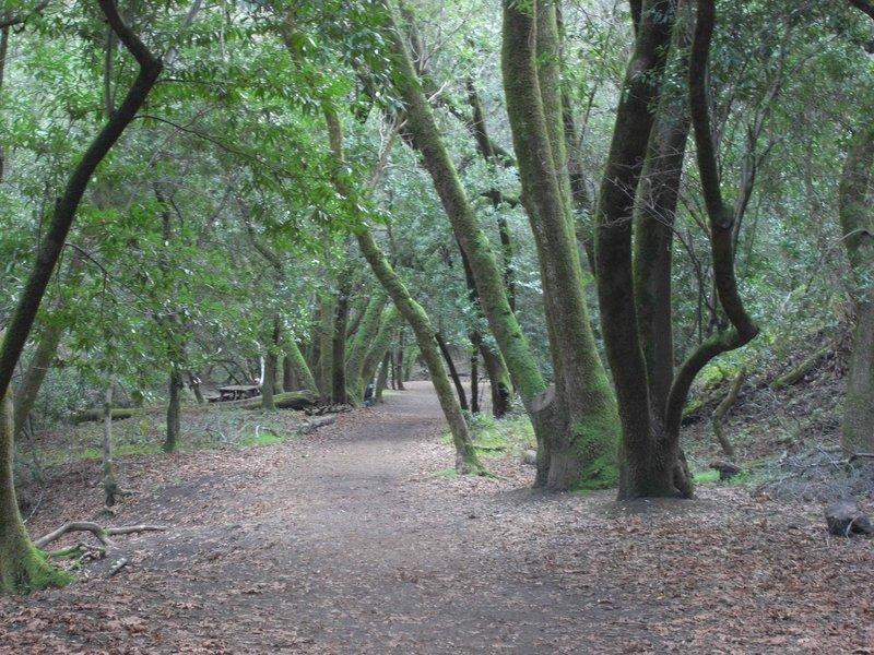 Hidden Villa Creek Trail