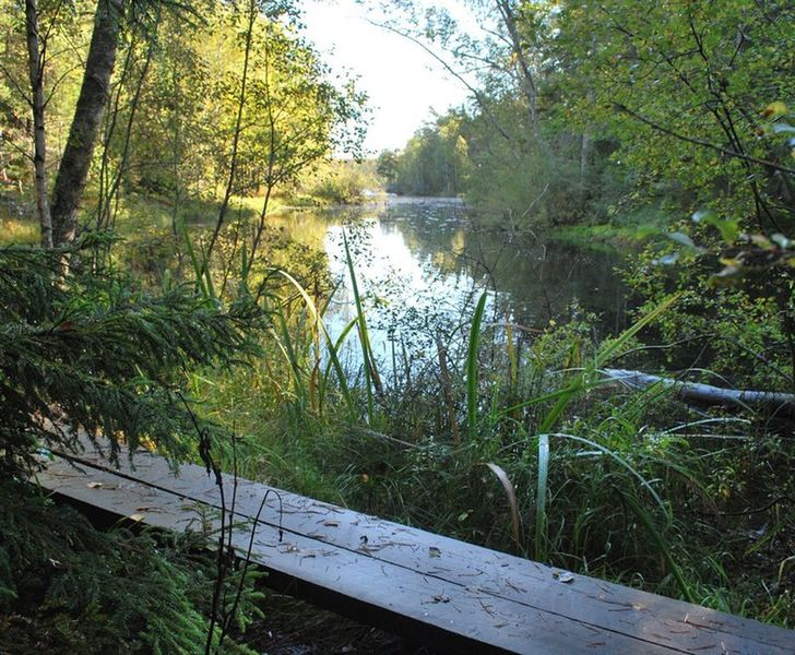 The wilderness in Tyresta National Park, made easier to conquer with some man-made footbridges.