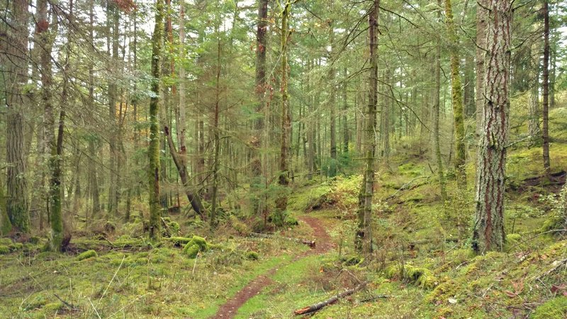 The beautiful woods deep in the heart of Turtleback Mountain Preserve, through which runs Ridge Trail.