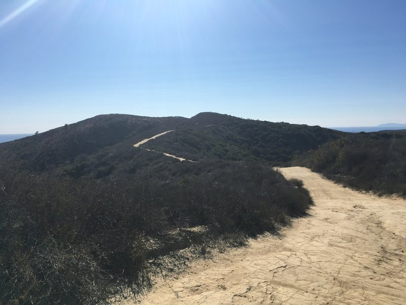 Meandering along the ridge.