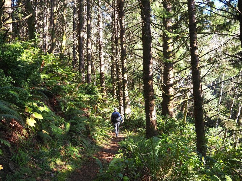 Through deep forest on the way to Cape Ferrelo