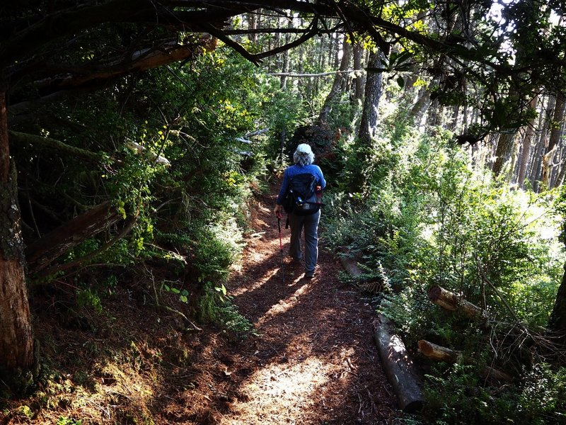 Descending thick forest and salal on Cape Sebastian
