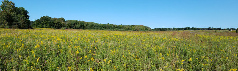 Panorama of Frohring Meadows, from the west side looking east