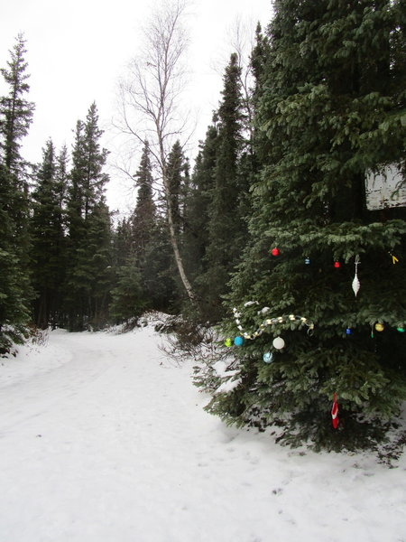 Decorated Trees Along the Homestead Trail