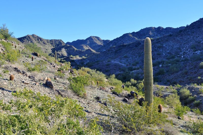 From the junction of 202 and 8A, look up the valley to the north.  At the ridge top on the left you meet trail 8B again.