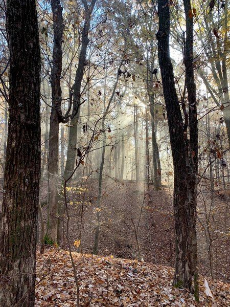 A foggy morning resulted in lots of pretty sunbeams.