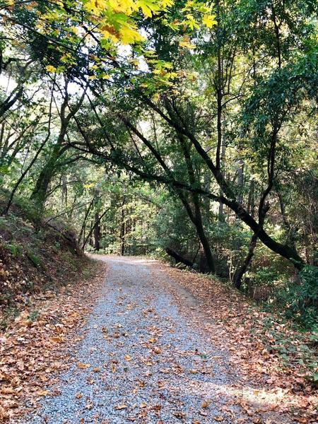 Beautiful wide trail to enjoy with friends and family.
