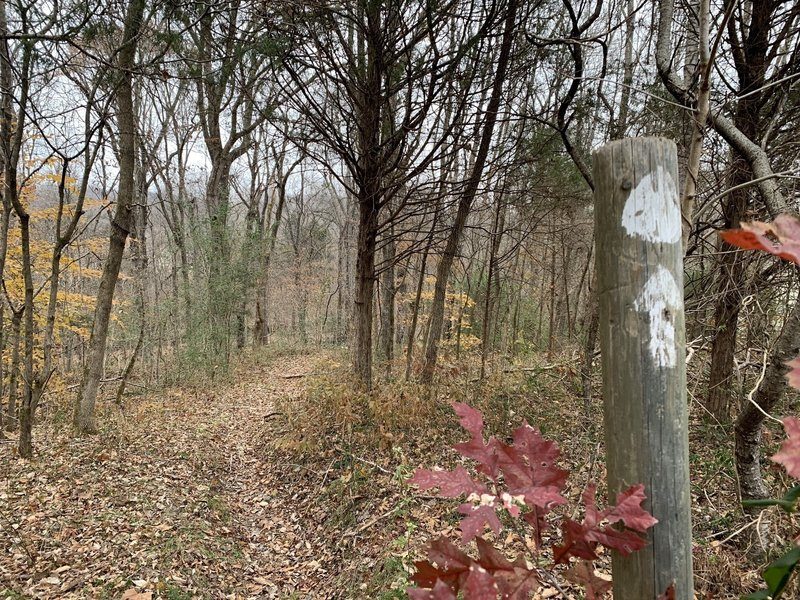 Trail markers, distinguishable solid trail, pretty late fall colors