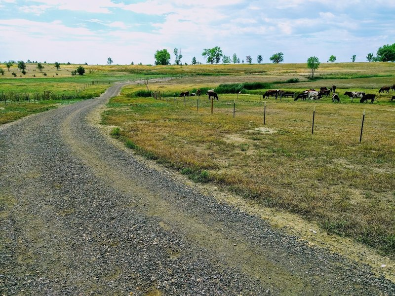 Wide gravel trail meandering through pastures.