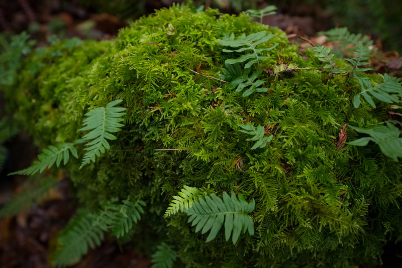 Moss and ferns, what a mix.