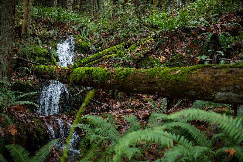Forest waterfalls dot the Hillside Trail.
