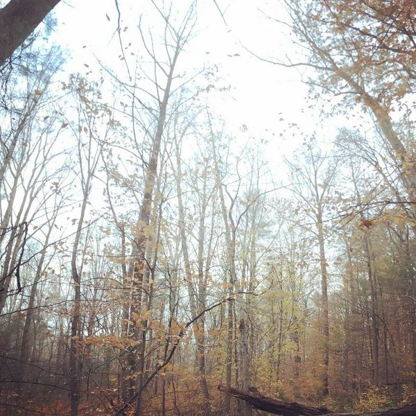 Last hold-outs of fall color. Great trail for fall and winter training.