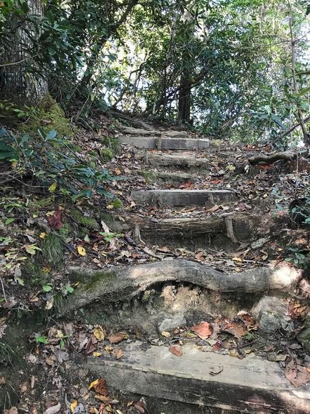 Tom Miller Trail has steep sections with built in stairs or roots to help with the climb and thick underbrush at the beginning.