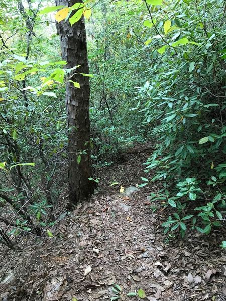 There are parts similar to this, where the trail almost feels overgrown and with a pack on trying to navigate through it, almost feels like it wants to push you towards the edge a steep hill or cliff, depending on the section. Probably needed a machete.